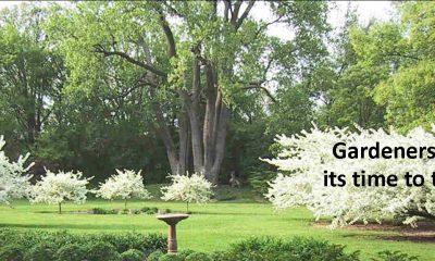 Banner for Garden Club showing photo of park garden in West Chicago Illinois