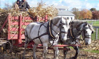 Klein Creek Farm