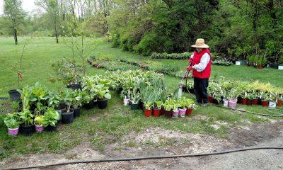 Garden Club member watering plants