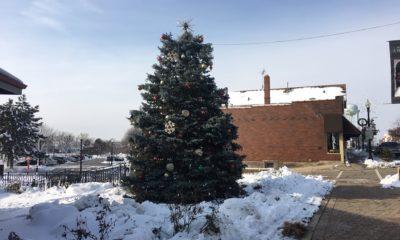 Christmas tree from Kramer Tree Specialists