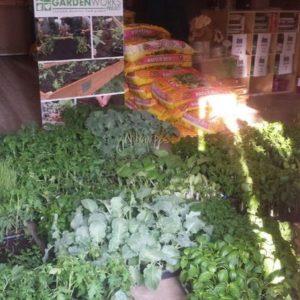 Organic seeding sale display