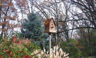Decorative photo of birdhouse in garden