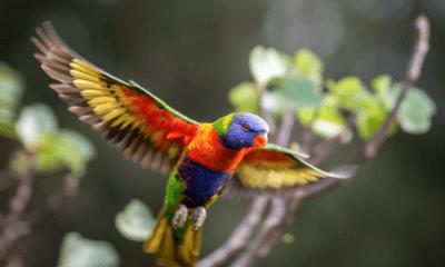 COLORFUL BIRD IN FLIGHT