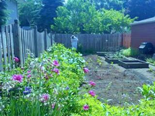 Horseley's garden
